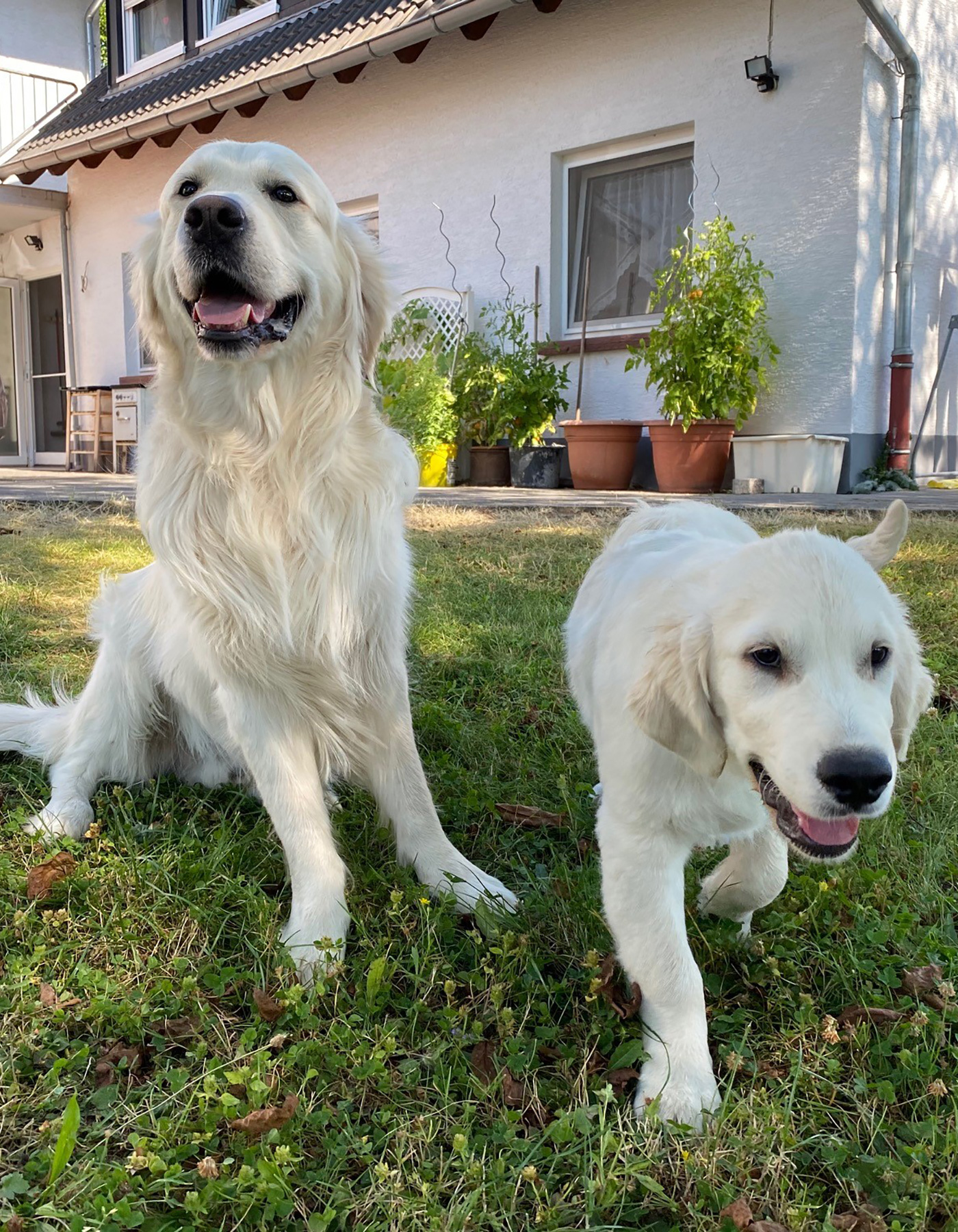 Neo & Finn